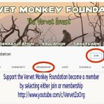 Image for the Tweet beginning: Help the monkeys become a