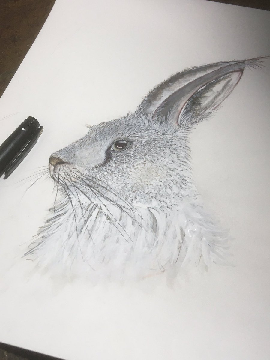 Bunny in watercolour and ink. Needing this art therapy right now #ArtTherapy #COVID2019pic.twitter.com/3SGDFEQrBb