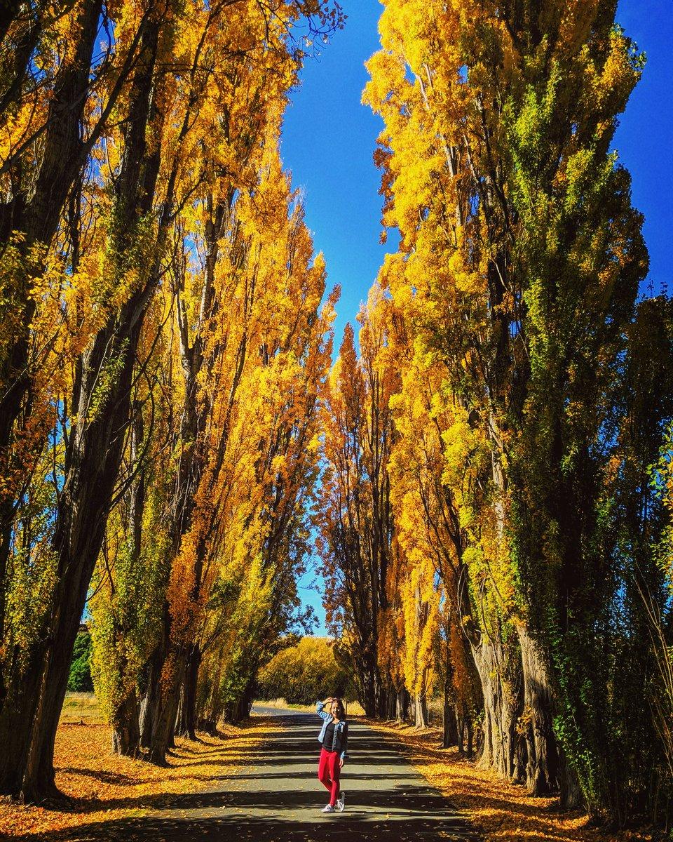 @tourismtasmania  @tasmania  Missing the 🍁🍂colours  #travelblogger  #AutumnD https://t.co/FsTLcw53EO