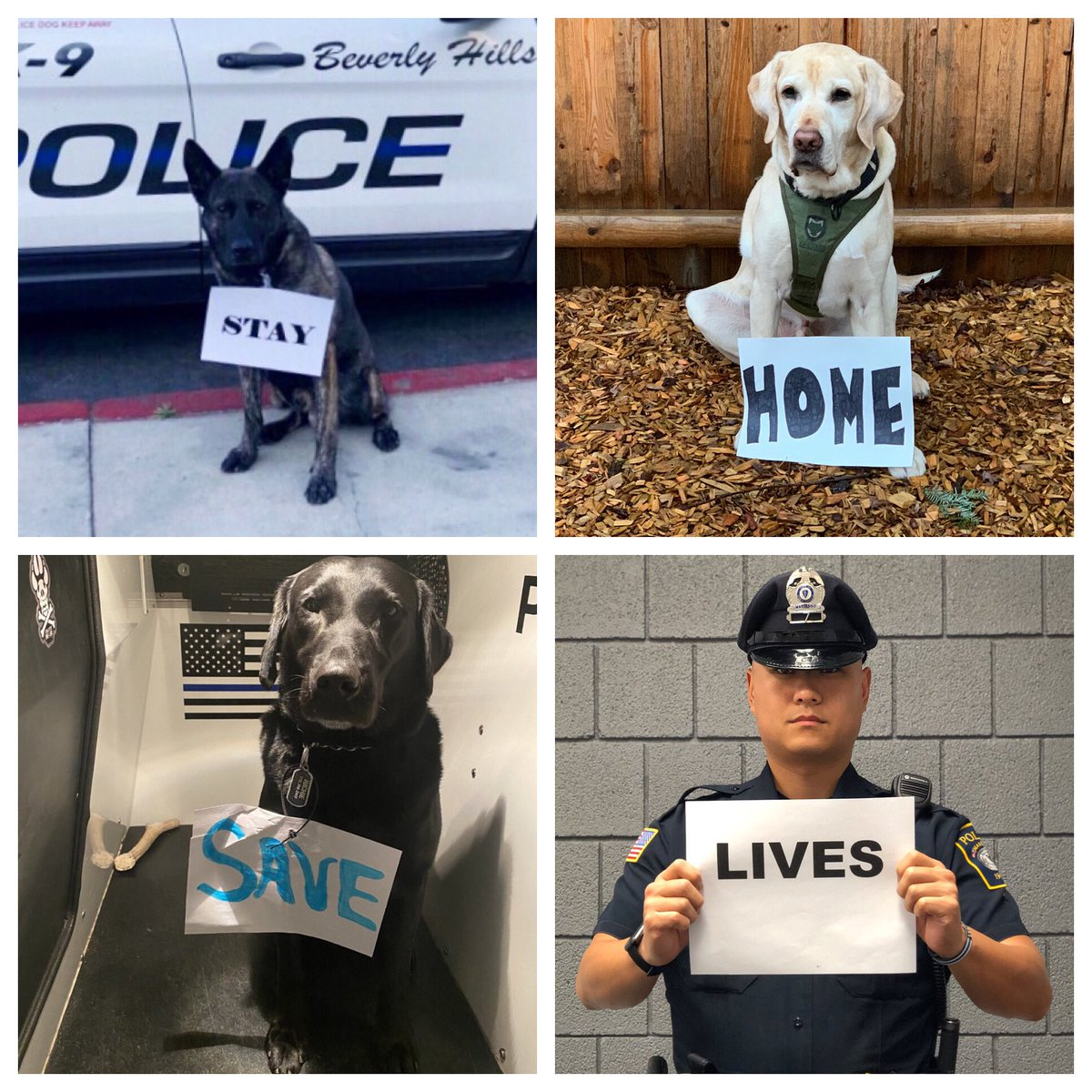 To help spread the necessary awareness of staying home right now, I have enlisted the help of some friends!  #ThinBlueLine #PoliceOfficer  #StayHomepic.twitter.com/8it79XXfwC