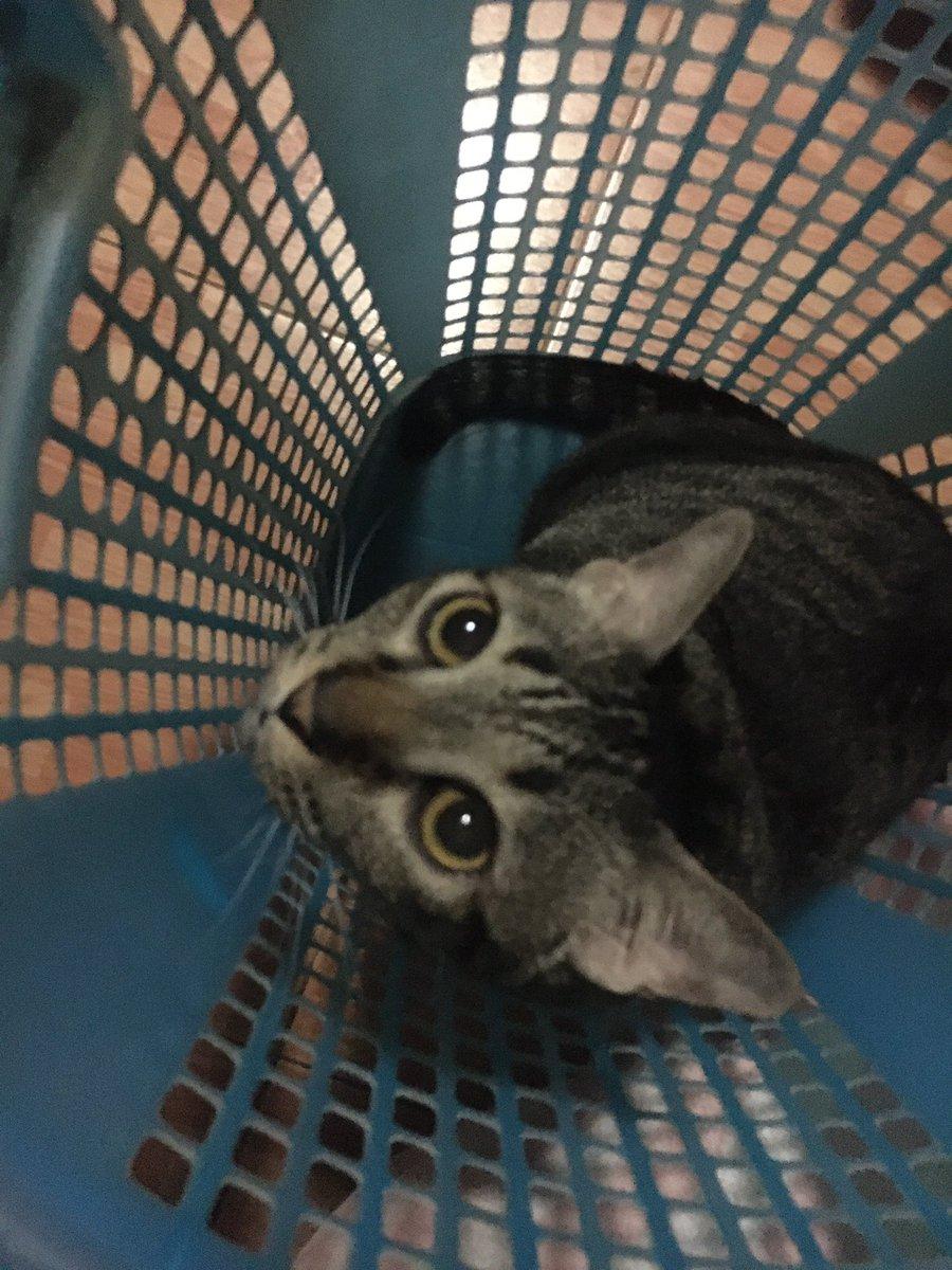 #euro #rescuedcats #eurofamily #kitty #kitten #cats #catagram #catlovers #catofinstagram #tabby #funnycat #thedailykitten #MyFunnyCatsCafe #dailykittens #igcats #igcatsdaily #theigcat #catscrazy #cattuso #sweetcatshubs #CatsOfTwitter #CatsOnTwitter #CatsOfTheQuarantinepic.twitter.com/9us4rYy5Uo
