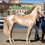 地球上で一番美しい生き物は馬?これを見れば多くの人が納得!