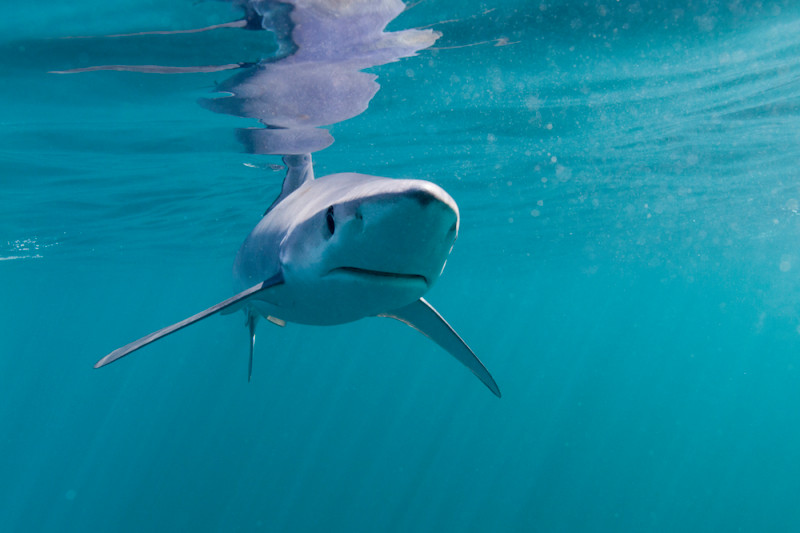 Including the doc Our Planet featuring this cute blue #shark for which there are no fishing limits. #Nolimitsnofuture