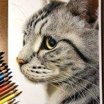 これ写真でしょ色鉛筆で描いた猫ちゃんがリアルすぎてビビった