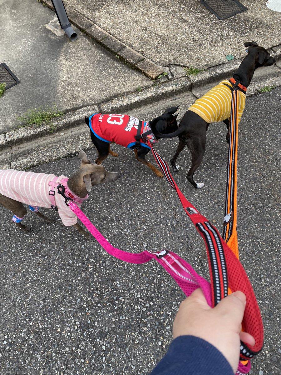 犬 時間 小型 散歩