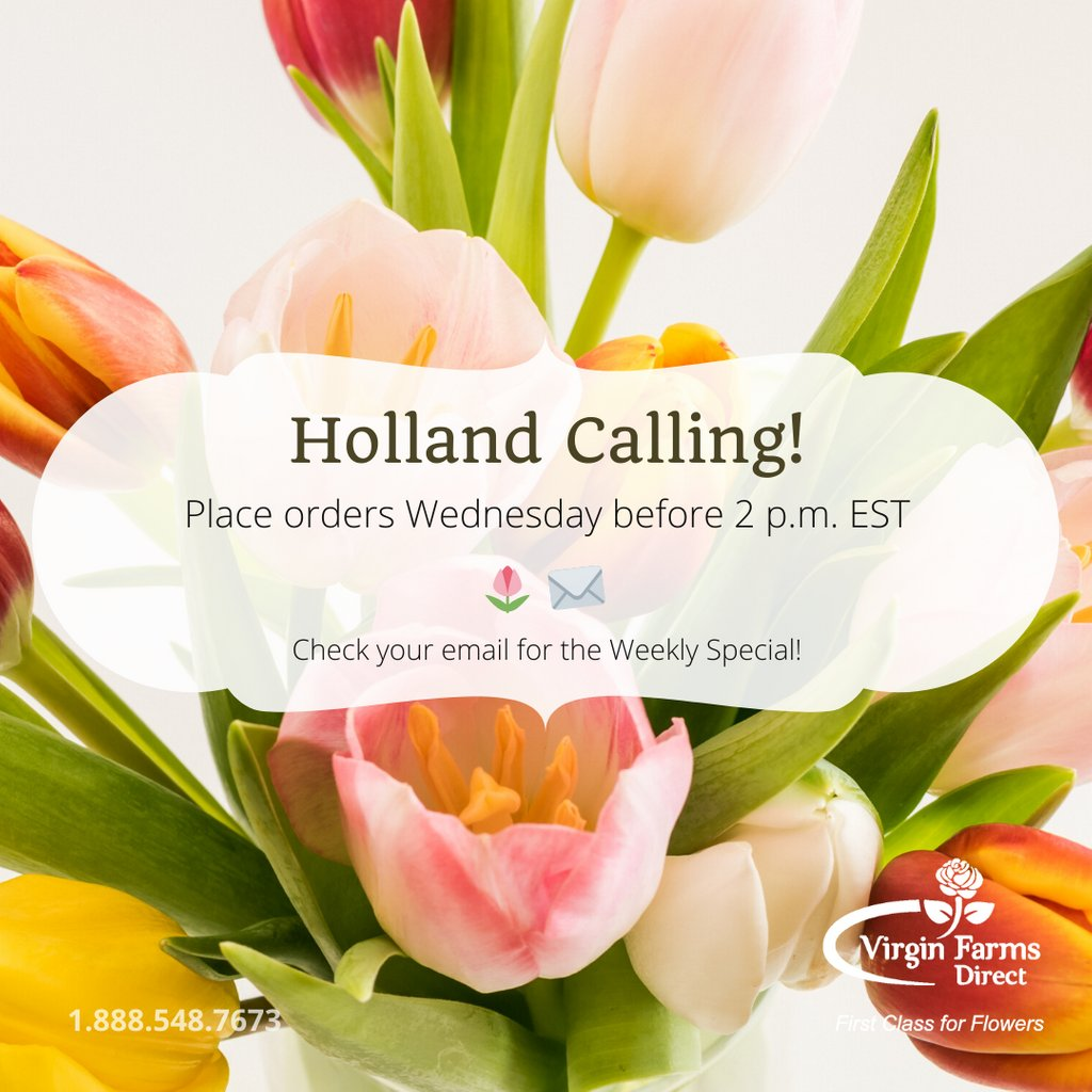 Place your orders for tulips, hyacinths, freesia, peonies and other Dutch flowers early. Call us! #VirginFarms #freshflowers #dutchflowerspic.twitter.com/rAvqQrLaId