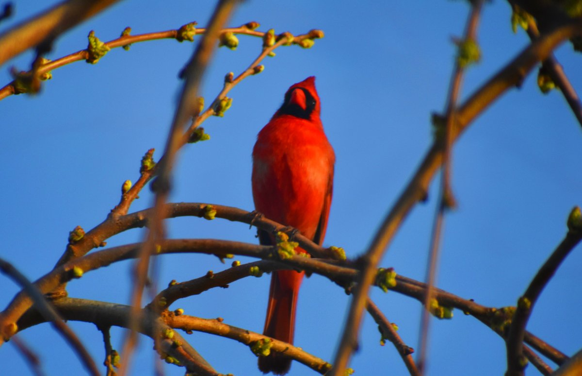 little #cardinal here at the #radio Ranch pic.twitter.com/ArDFTMb6GG