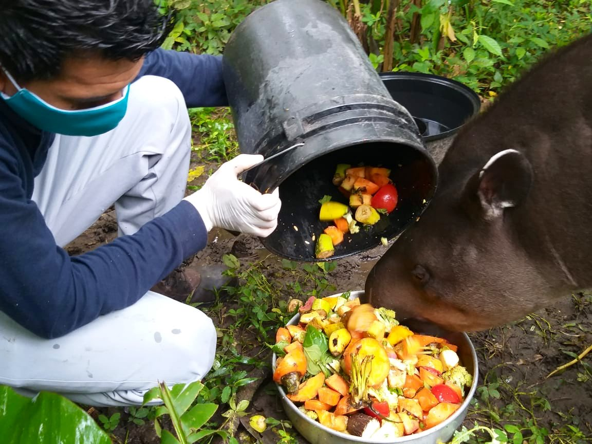 Equipos técnicos de veterinarios y zoocuidadores de los parques administrados por @inmobiliarec: Turístico Nueva Loja, Histórico Guayaquil y Marino Valdivia continúan con labores de atención médica y alimentación a los animales. ¡Gracias por su trabajo y esfuerzo diario! https://t.co/Q0DLJEM9Pd