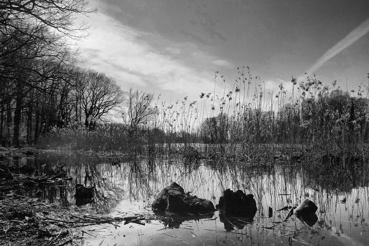 Nature is wise, it gives us peace and relaxation. People could take this as an simple example  #berlin #photo #photography #blackandwhite #monochromepic.twitter.com/Xp7uJW17lG