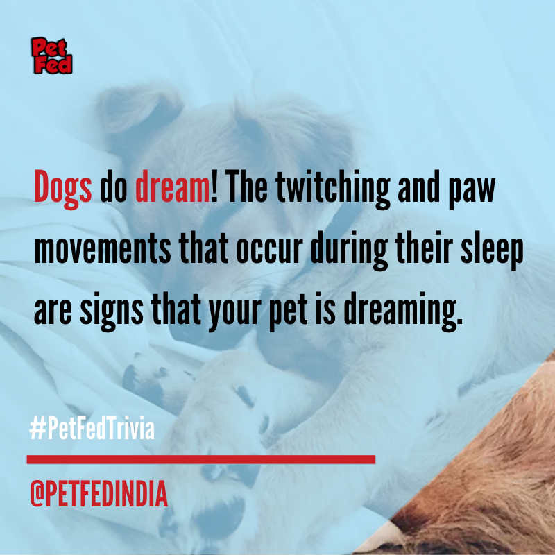 Dogs and humans have the same type of slow wave sleep (SWS) and rapid eye movement (REM) and having same sleeping pattern, dogs can dream too! Share with us any other interesting facts you know about pets in the comments below.pic.twitter.com/wNBujqTLbO