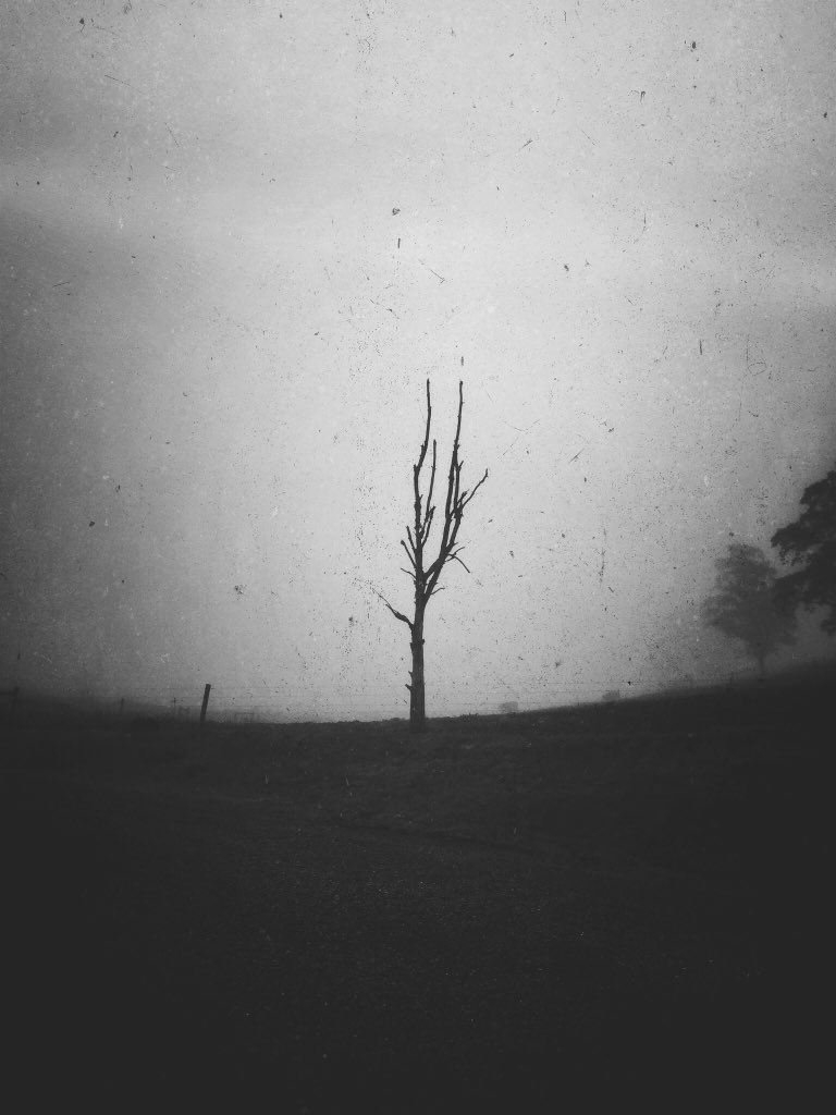 """""""When I'm so lost that this losing feels like dying...I hope you'll be by me then"""" ~ DMB @davematthewsbnd @DaveJMatthews @DMBMamas @DMBGorgeCrew @antsmarching @mextures @pr0jectuno #monochrome #Pennsylvania #lonelytree #27 #fineartphotography #PhotoOfTheDay #FineArtAmericapic.twitter.com/LF6BOYsq6f"""