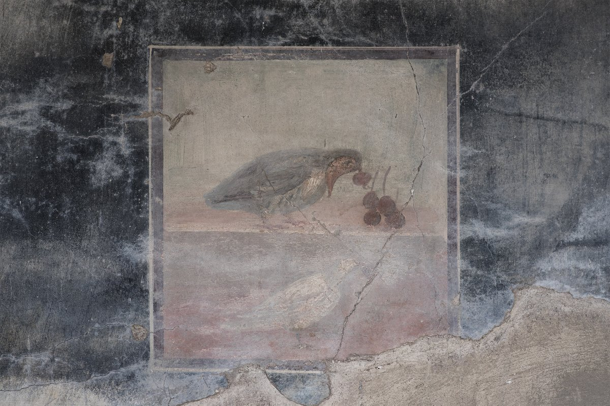 test Twitter Media - The bird's peack, kept live among the the beautiful digs of #Herculaneum.  #trentaremi #campania #archaeology #ercolano #ancientrome #iorestoacasa https://t.co/3OsapSlHJf