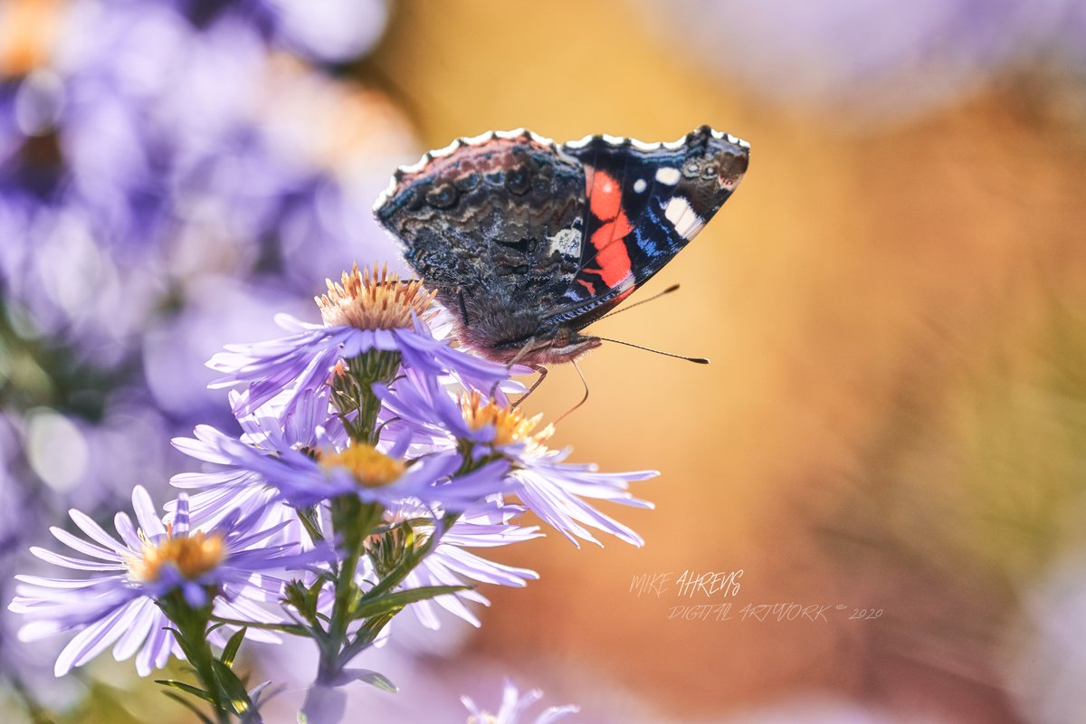 After gardening, just sit in the garden chair and watch! #gardening #butterfly #gardentime #photography pic.twitter.com/mv8UVYYOrD