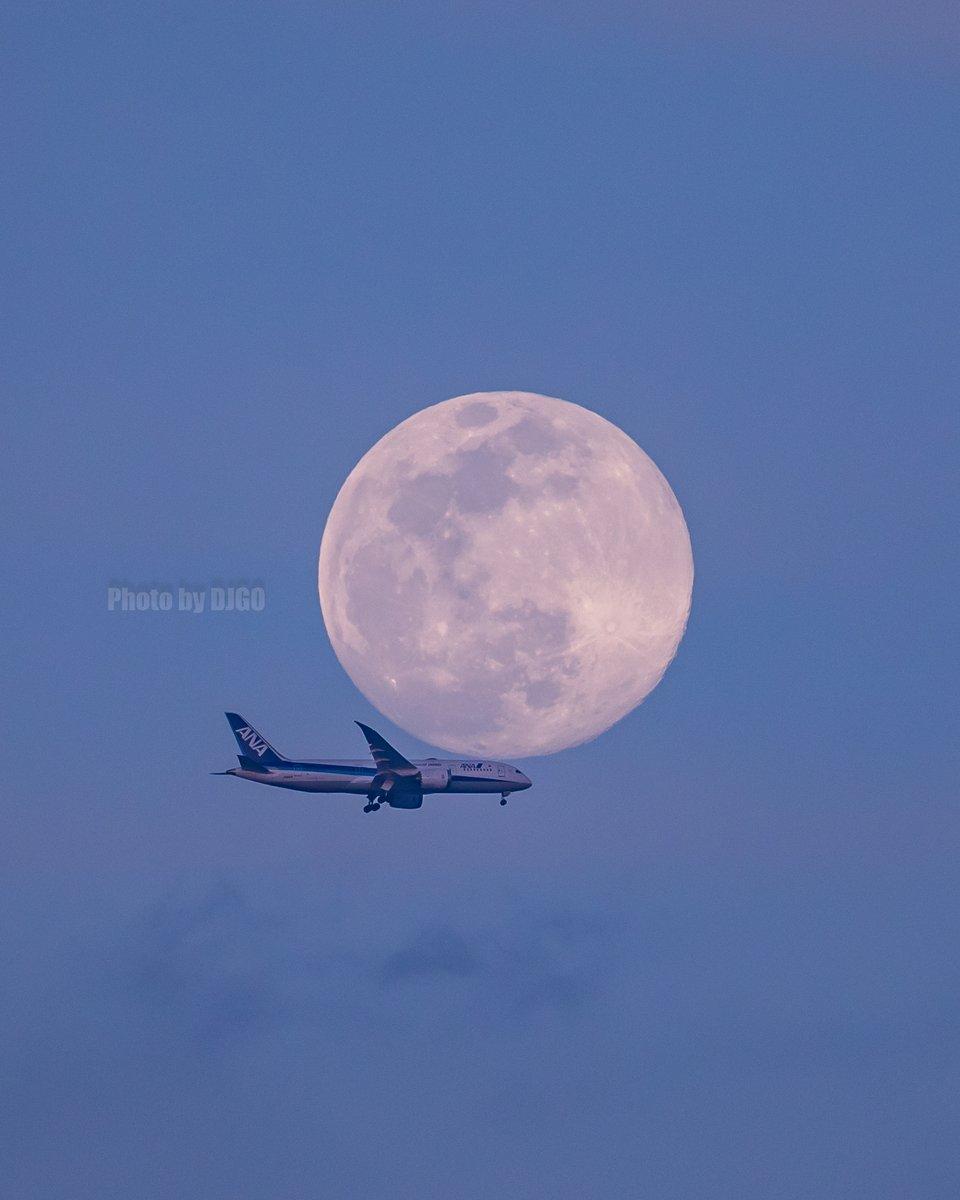 Super Moon × ANA ~2020.04.07~ #DJGO_PhotoTweet #Canon #EOS5Dmark4 #月丼 #ANA #全日空 #頑張れANA #STARALLIANCEpic.twitter.com/7yyAwvmAaT