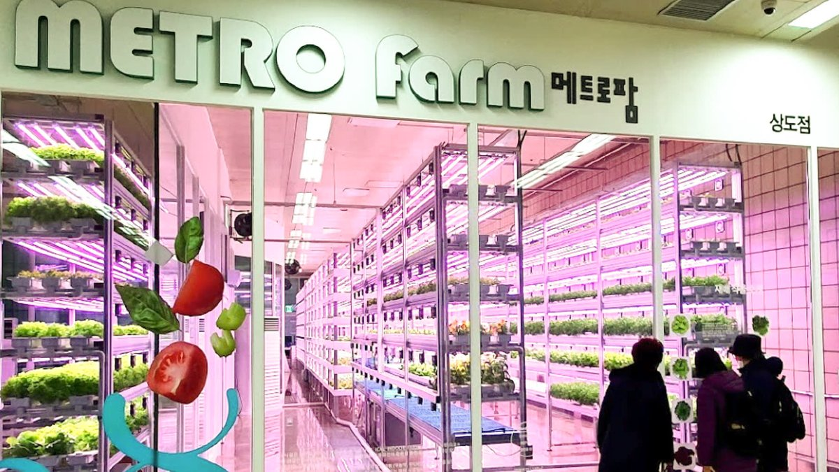 Underground farms sprout in Seoul's subway stations! #underground #urbanfarming #SupplyChains #Korea #Asia #Seoul #foodtech #innovation   Link: https://asia.nikkei.com/Business/Startups/Underground-farms-sprout-in-Seoul-s-subway-stations…pic.twitter.com/xXNXONC1aO