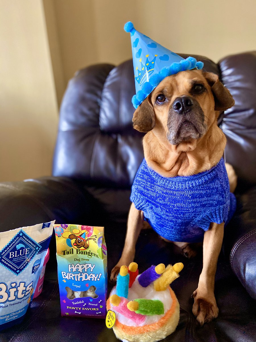 Some personal news/distraction from #COVID19:  My spoiled & loving puggle, Milo, turns 6 today!   Seen here before devouring his #birthday treats, and striking a pose on our walk!   #HBD #dogsoftwitter #puggle #dogs #BirthdayPhotoShoot #birthdaycelebrationpic.twitter.com/dq6TUhmOHz