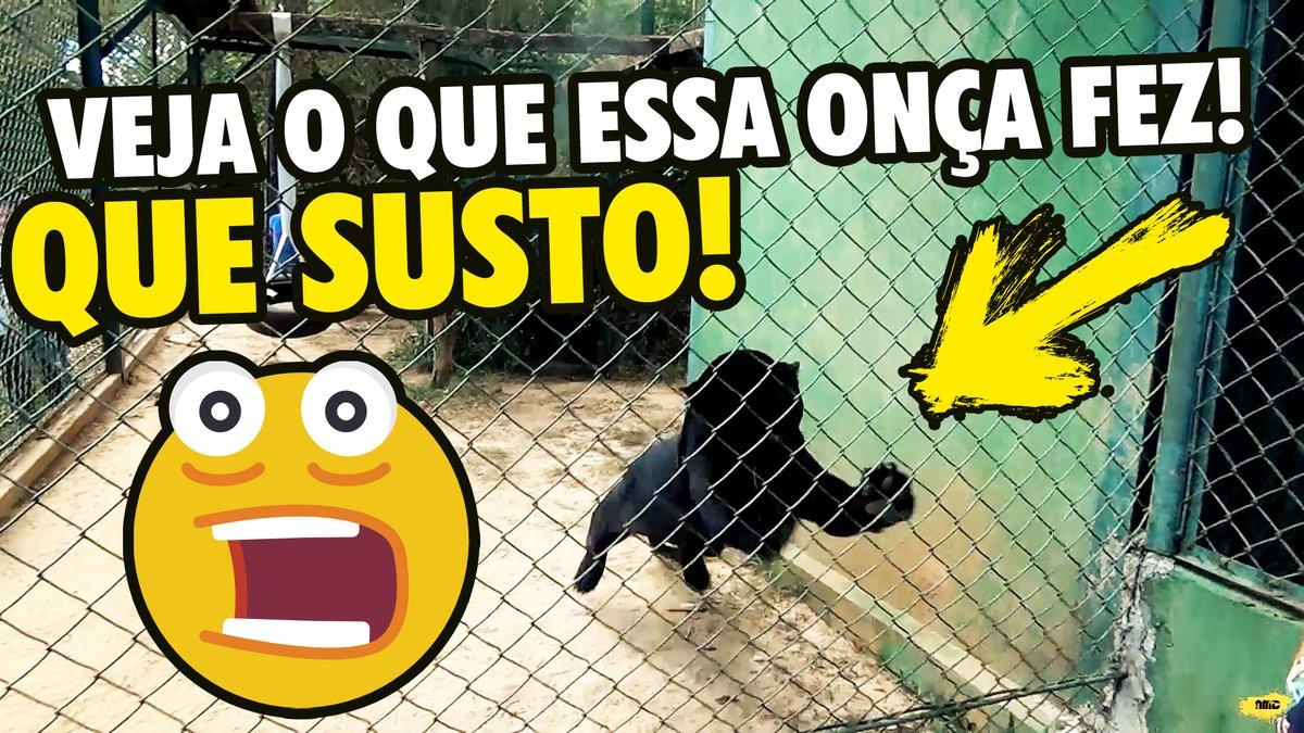 #felinos #onças #NEX  Visitei um dos maiores santuários de onças do Brasil e quase me caguei logo na entrada...  https://t.co/yY7d4PM8xI https://t.co/0MTdw9ueJ1