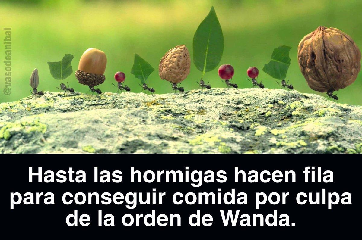 Por culpa de Wanda...