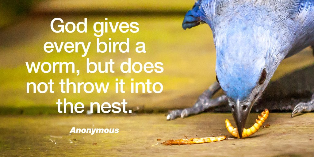 God gives every bird a worm, but does not throw it into the nest. - Anonymous #ThankfulThursday