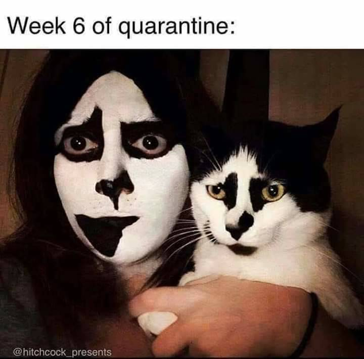 And now for some #levity #meme #cats #kiss #funny #jokes #hope #uplifting #wegotthis #dontgiveup #dontstop #cool #indiecomics #kickstarter #michigan #detroit #annarbor #comingsoon #incoming #indeep #marvel #projectaxis #annarbor #altcomix #awesome #agame #amazing  #selfhelp