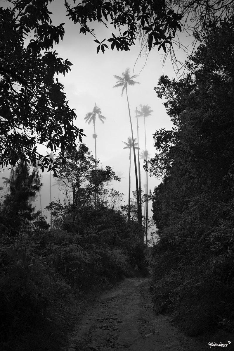 #Black&White #landscape #fog #cocora
