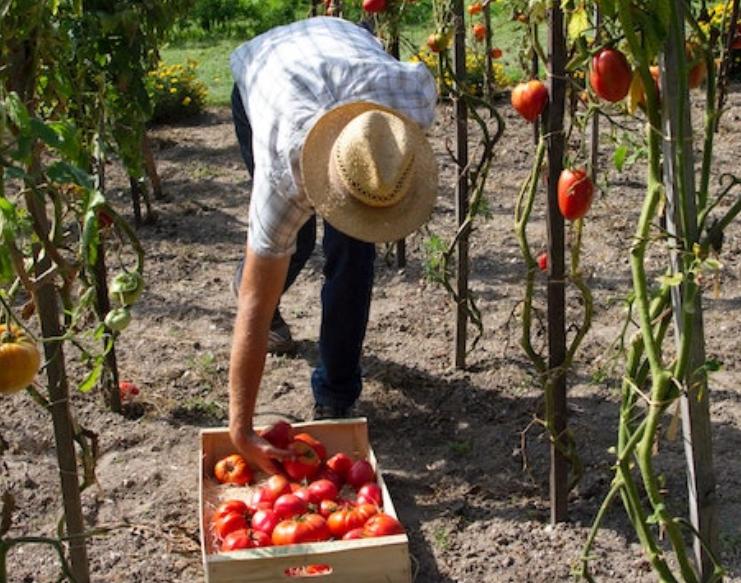¿Cómo garantizar la seguridad #alimentaria en tiempos del #COVID-19? por @RedRelaser https://t.co/ByL5pQow0l https://t.co/uYUkDzadBc