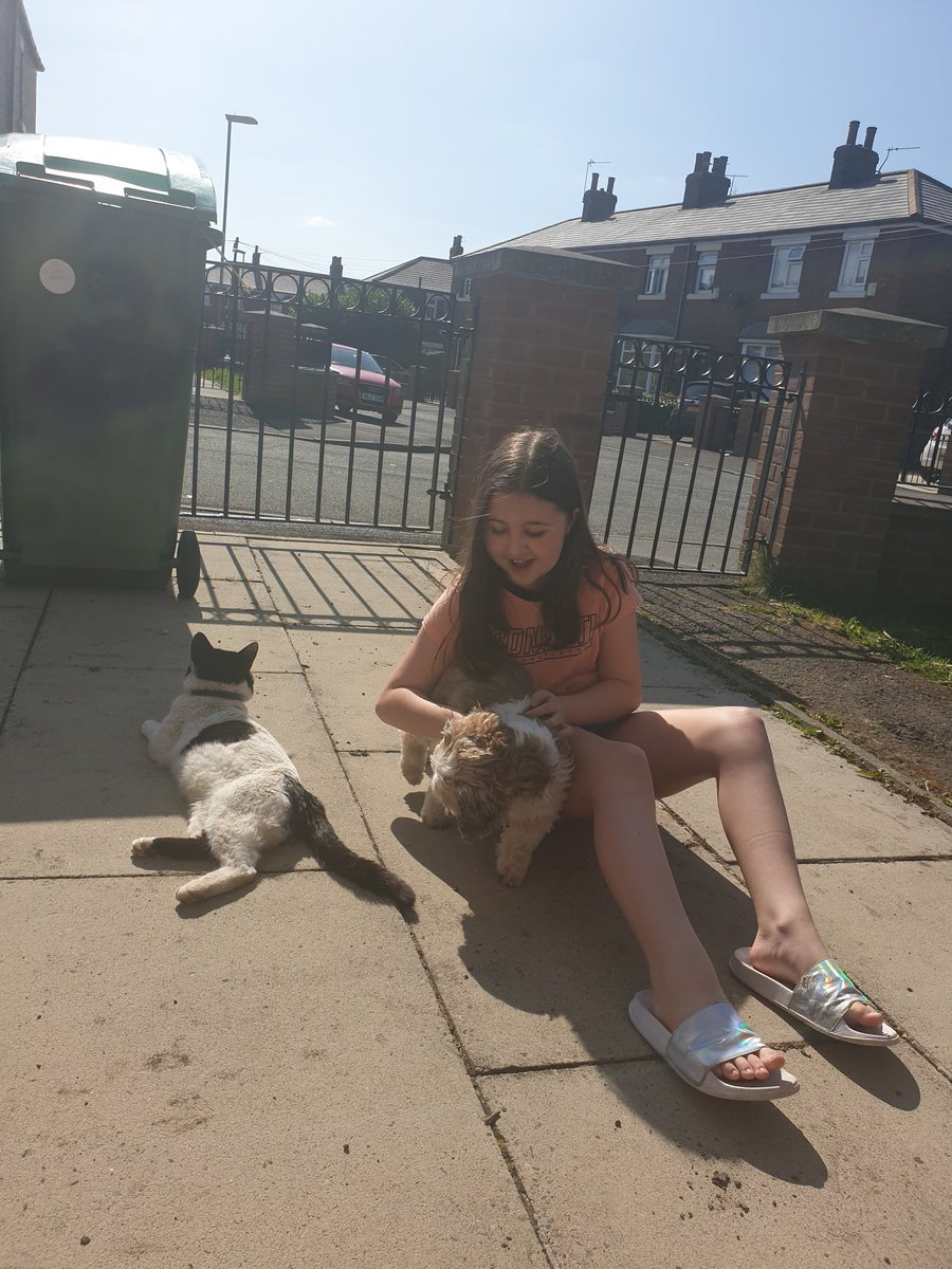 @HolyFamilyOL8 @Year6HolyFamily @mrsbooth11 some fun in the sun with Katie's pets. #hot #sun #dogs #cats #funinthesun