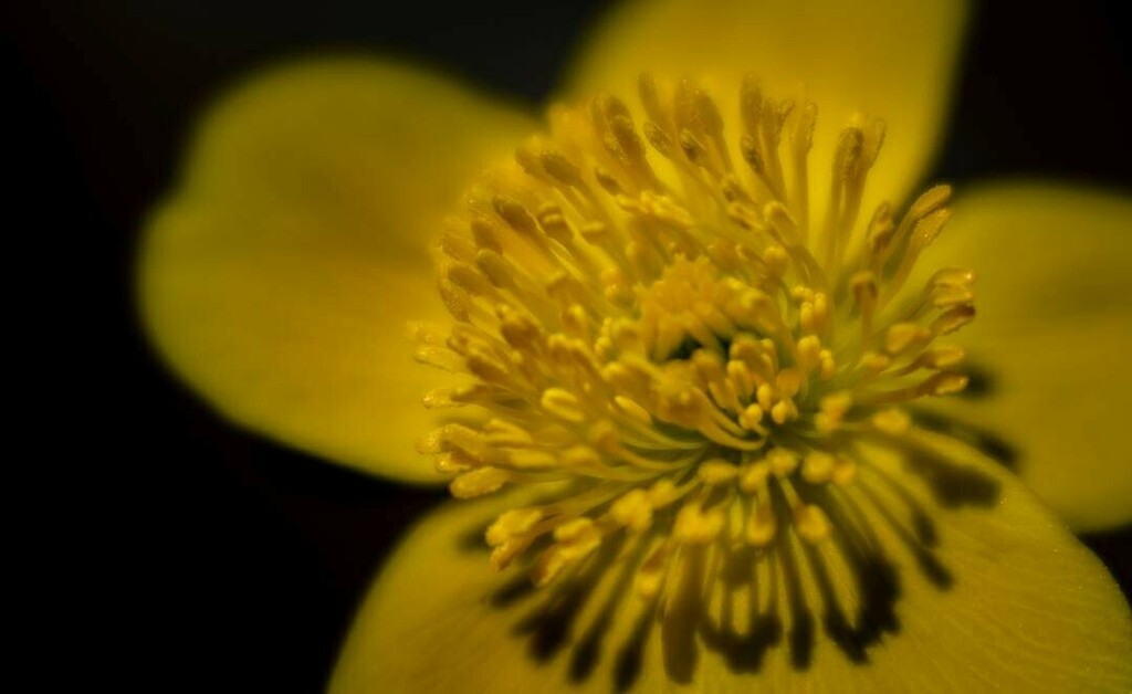 Yellow  all stamens neat in the sunshine  #closeupphotography #close_up #photooftheday #floral #photography #flowers #closeup #flower #love #flowerstagram #nature_hippys_  #flowers_moody  #moody_tones  #pr0ject_uno #mode_emotive #the_mirror_of_our_souls #ZonePhotographer #bp…pic.twitter.com/Mnhnsr4jTd