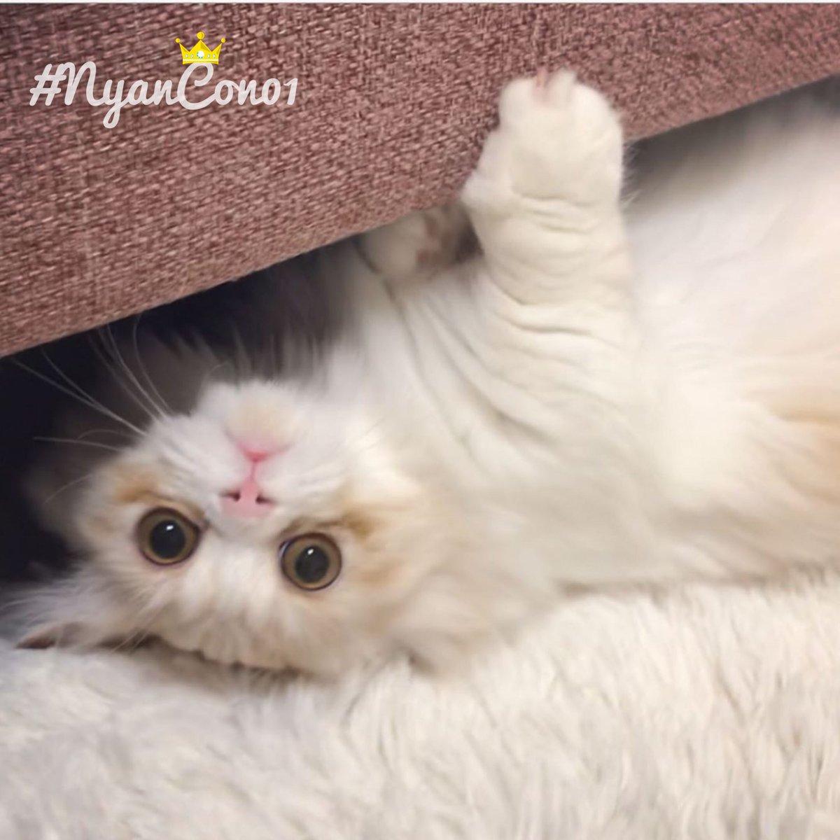 今日のニャンコ♡ #nyancon01  #ニャンコン #cat