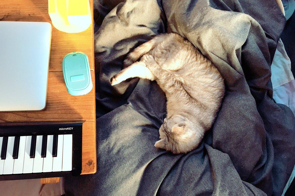 猫が机に乗ってほしくない時は、フカフカを横に置く。  (水色のはマウスではなくネコ用ブラシ) #猫 #ねこ #ネコ #cat #hipstamatic