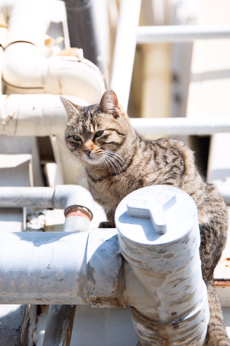 近所で会った猫たち🐈  高場から警備お疲れニャ🐈🚨  #猫 #ねこ #ネコ #cat