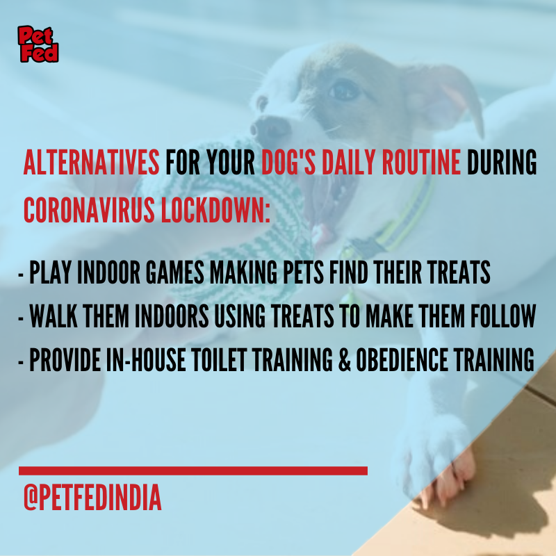 Stuck indoors with your dogs agitated and not having their usual active routine because of the lockdown? Check out our blog to find some of the alternative activities you can have for your dogs at home daily. Visit https://petfed.org/blog/check-out-the-alternatives-for-your-dogs-daily-routine-during-coronavirus-lockdown …pic.twitter.com/z7L5czYCfF
