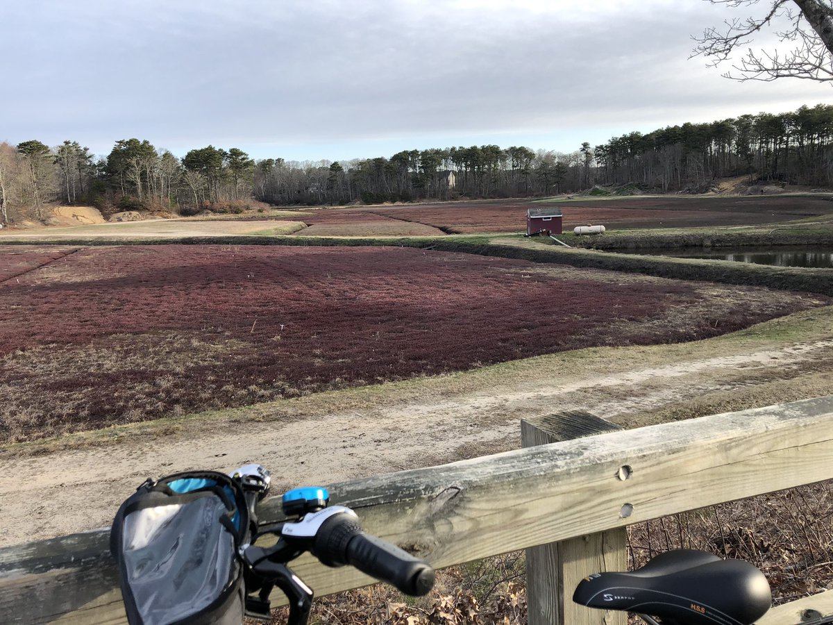 Scene from yesterday's bike ride after #5amwritersclub and before work: Cape Cod cranberry bog.  #CapeCod<br>http://pic.twitter.com/GgssGHVVKK