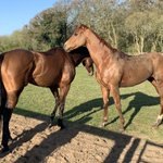 Star Shield and Orbaan enjoying the sunshine after morning exercise!!@MprUpdates
