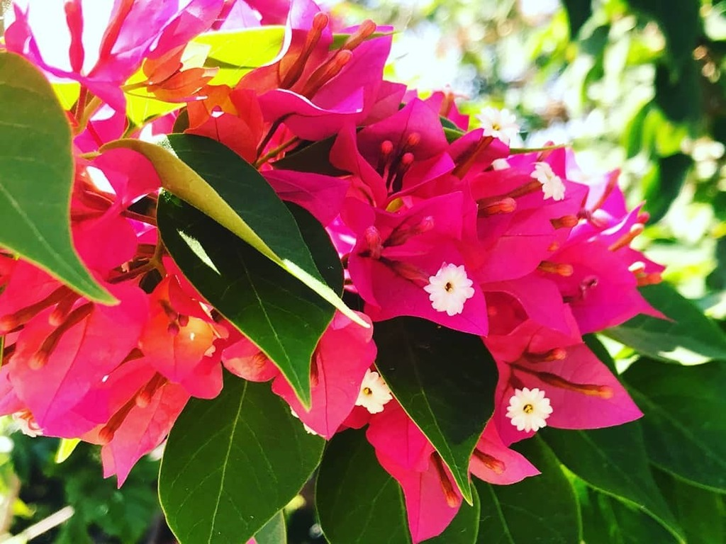 If you look the right way you can see that the whole world is a garden 💐 . . . .  #ShotonRealMe #Naturephotography #Park #Naturelover #Flowerstagram #Summervibes #Mondaymotivation #Summerfun #Parkjimin #Natureza #Naturelovers #Summertime #Summer #Flo…