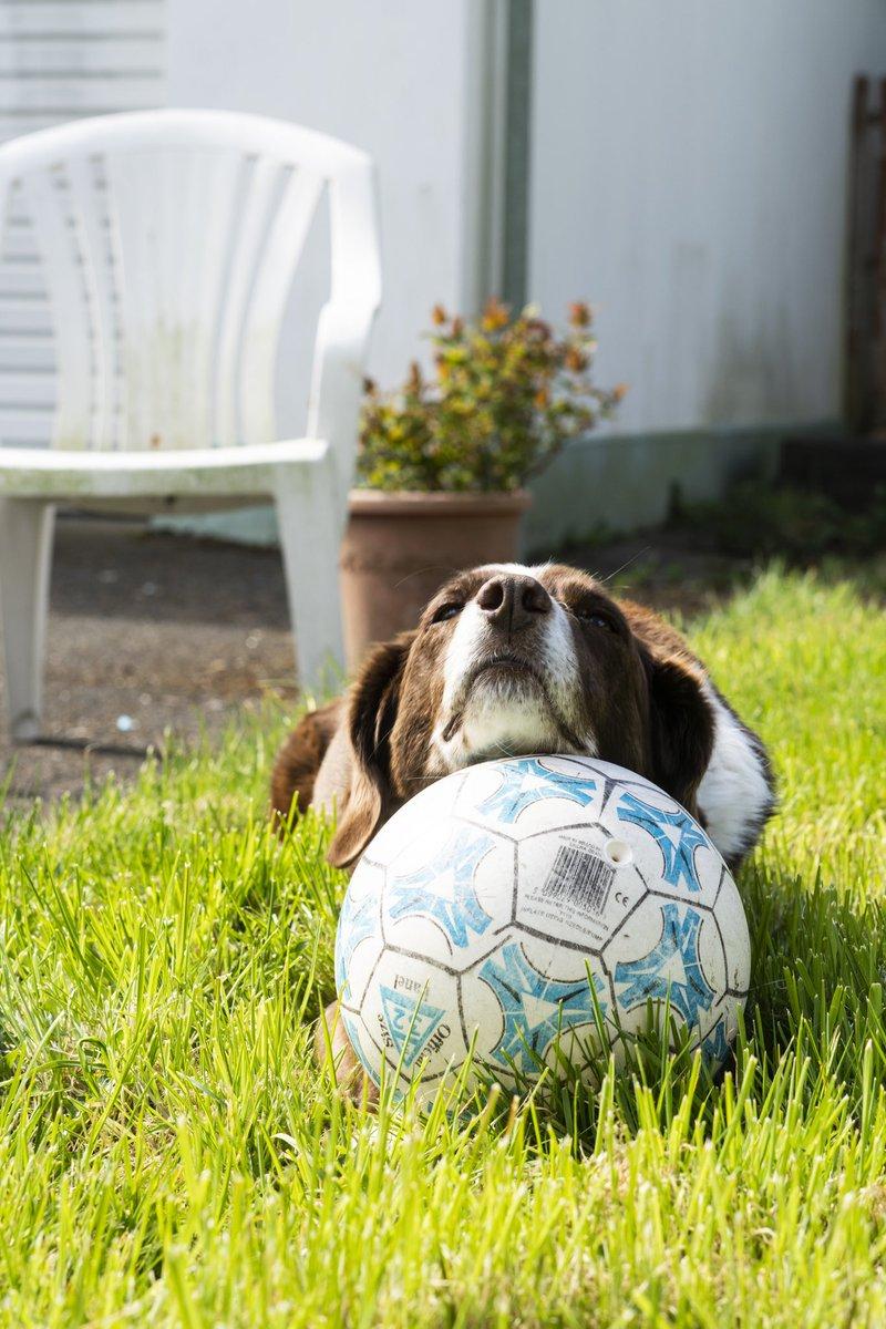 #dog #dogsoftwitter #doggy #dogs #dogsofinstagram #supermoon #SingleLadiesChallenge #snapchatdown #PS5 #WednesdayMotivation #WednesdayWisdompic.twitter.com/EHJco7luFX – at Carrickfergus
