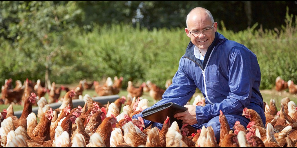 Did you know? 'Comfort and grooming behaviours' are important to #hens and include feather ruffling, head scratching, body shaking, wing stretching and flapping. Find out more about #RSPCAAssured. bit.ly/1nzIYZn