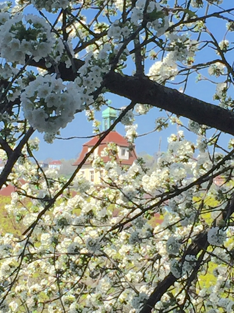 Spring impression as seen from our office window. #UniStuttgart #navigation #Stuttgart #blossompic.twitter.com/1NaNOMBDsa