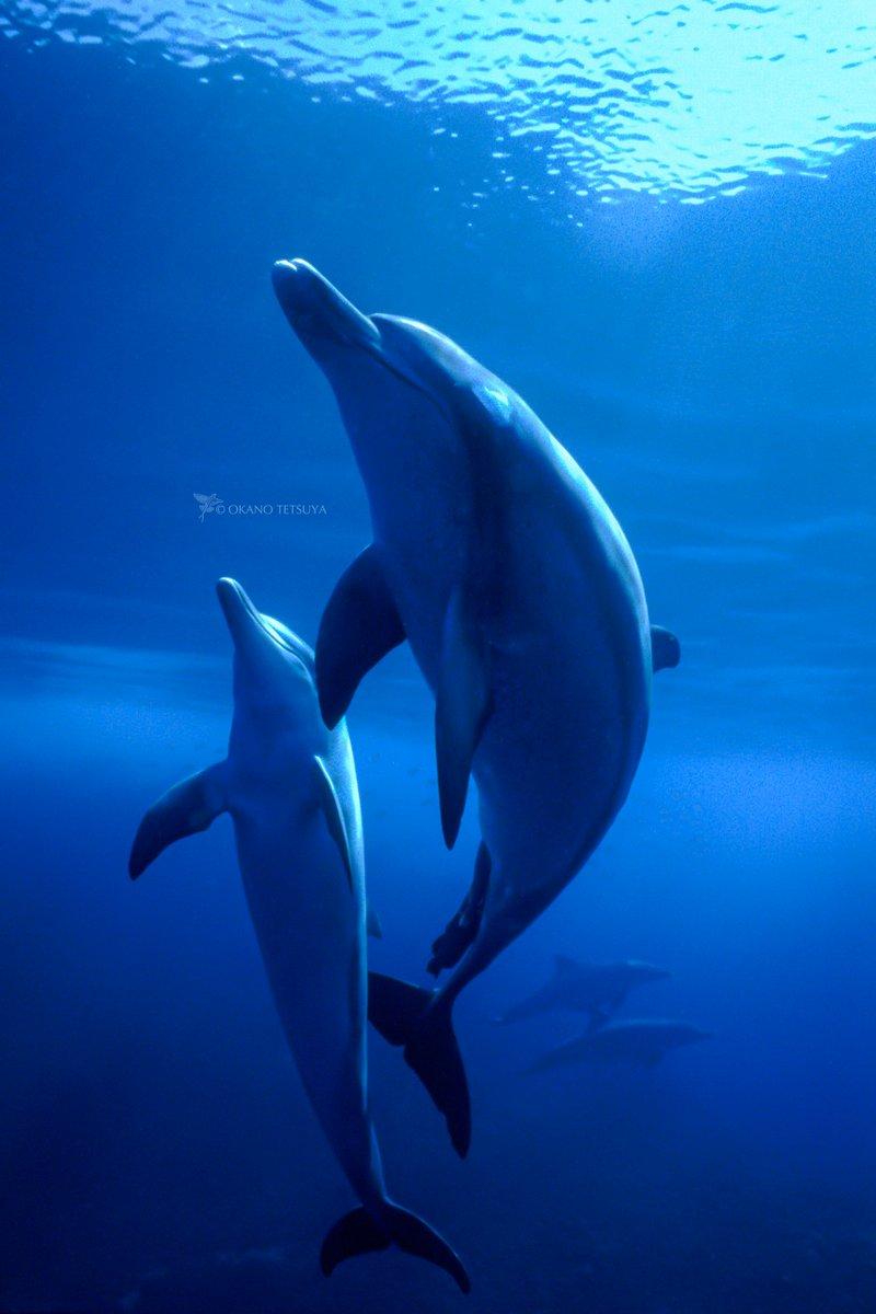 Twitter पर T Okano ちょっと大きめの壁紙サイズ スマホの壁紙を変えてみませんか コロナが落ち着いたら ぜひ小笠原を訪ねてみてくださいね 光り彩なす島 小笠原諸島 コロナで気が滅入るからみんなの写真で旅行しようぜ 小笠原諸島 イルカ Dolphins