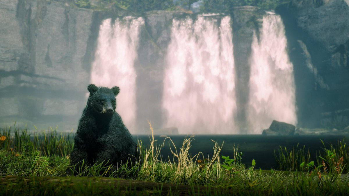 where to find black bear rdr2