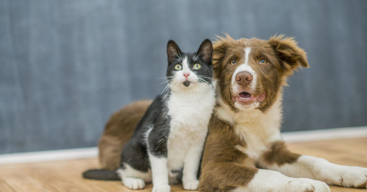 Can cats and dogs #Catch #Coronavirus? https://is.gd/4URwp1 pic.twitter.com/X6sXmIWkKL