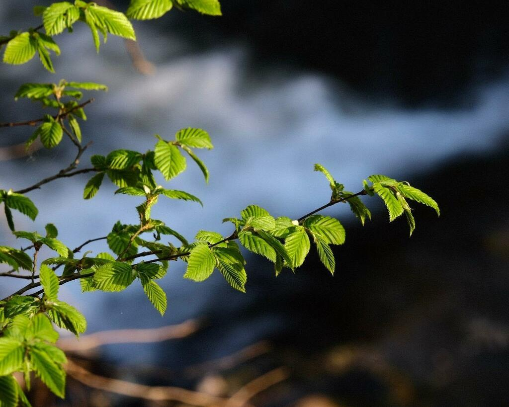 Der Frühling kommt mit Riesenschritten. Im Wald bei Niedererbach. Jpeg aus der Kamera.  #landschaft #landscape #landschaftsfotografie #natur #nature #naturfotografie #frühling #spring #longexposure #fujifilmxt3 https://instagr.am/p/B-uv-x2A9eQ/pic.twitter.com/SZuqpBjpcO