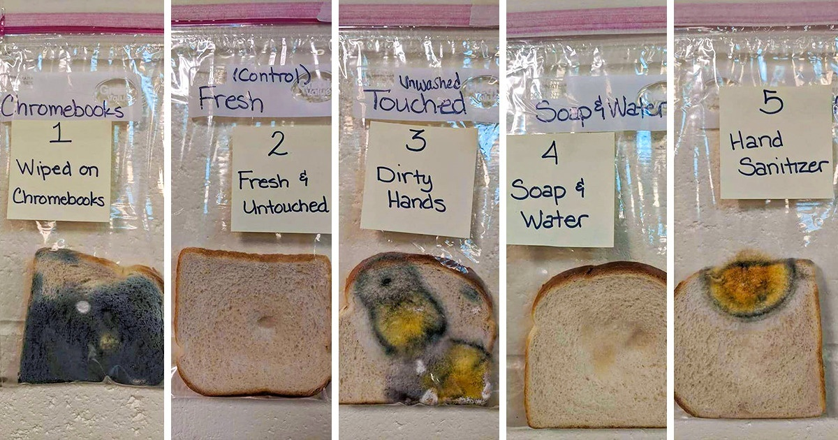 How dirty are your hands and surfaces around the house? Take the #whitebreadchallenge to find out! This simple experiment is a way to to teach kids the importance of washing their hands! https://chabotspace.org/wp-content/uploads/2020/04/White-Bread-Experiment.pdf… Photo Credit: Jaralee Annice Metcalfpic.twitter.com/UaJQKP4Ak2