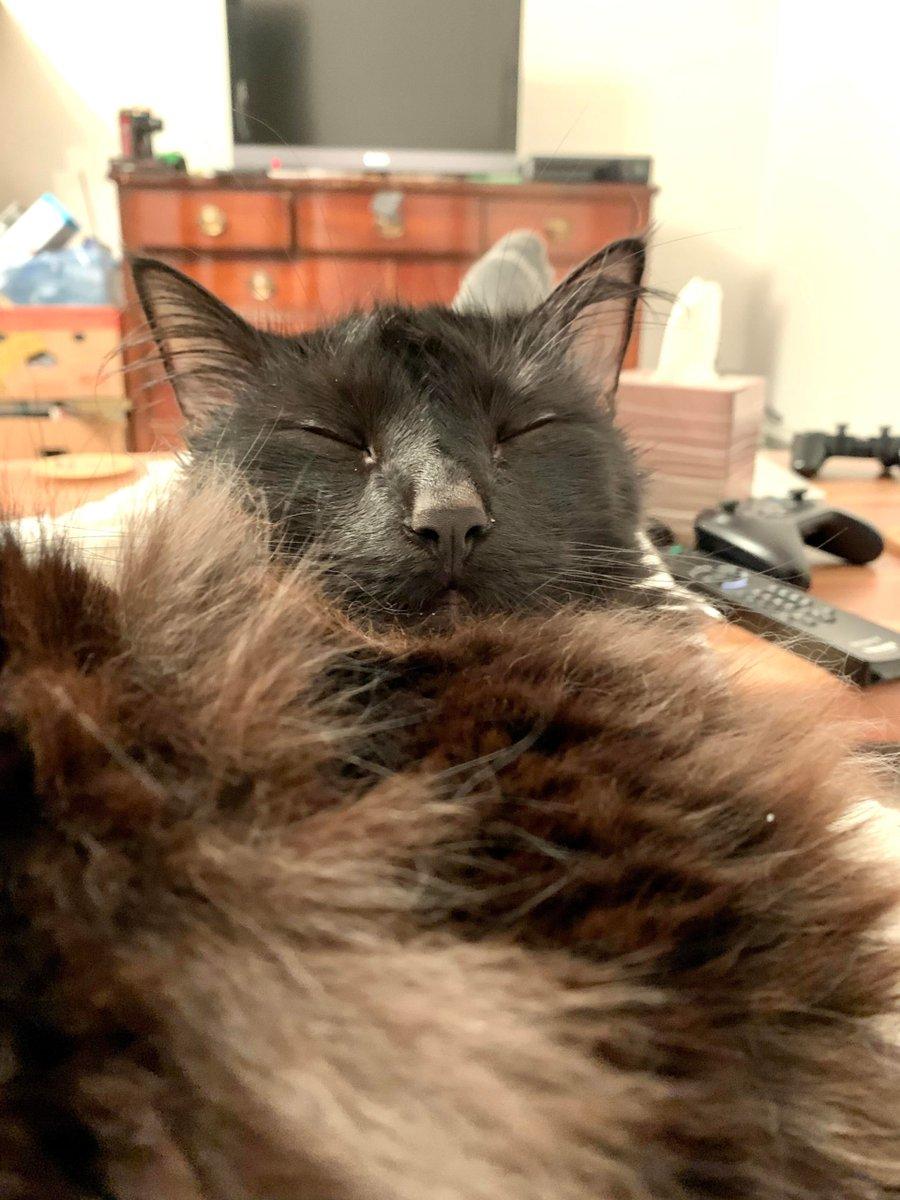 My #Floofy #Boy is #Soaking all the #Quarantine #Snuggles he can get   #Cats #Cat #Kittens #Kitten #Kitty #Pets #Pet #Meow #Moe #CuteCats #CuteCat #CuteKittens #CuteKitten #MeowMoe  https://www.meowmoe.com/612067/my-floofy-boy-is-soaking-all-the-quarantine-snuggles-he-can-get/…   .pic.twitter.com/bWQxcTWsaN