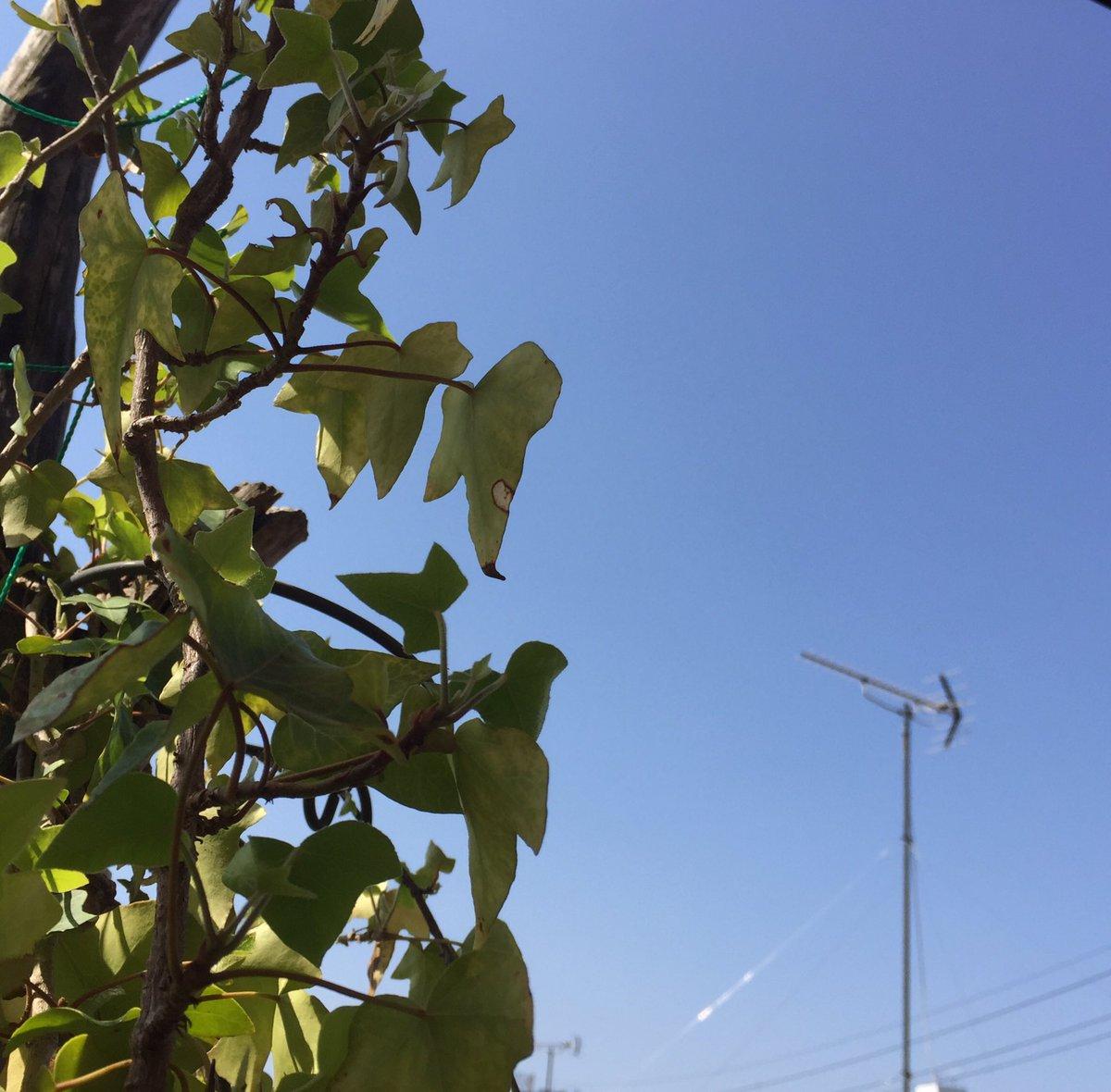 Tokyo  ☀️☀️☀️THU☀️☀️☀️  気温 15℃      湿度 39%  #イマソラ #sky #Flower #蕾 #光  花と景色眺め💐  #家 気持ち良い一日を🌷  #joy have a  wonderful day🌸