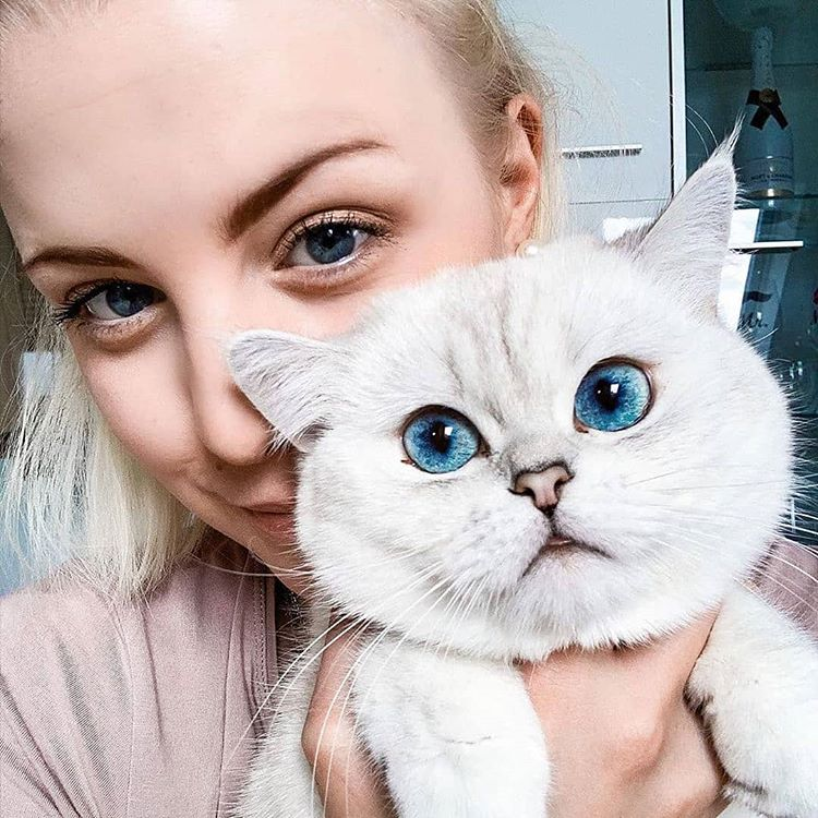 Look at to their eyes#cat_heaven1 #catlover #cats #cat #CatsOfTheQuarantine #of #catsoftwitter #instagram #catoftheday #catlovers #catlife #meow #kitten #kitty #kittens #world #pet #catlove #cute #pets #love #cutecat #catloversclub #animals #gato #lovecats #cutecats #bhfyppic.twitter.com/RYZ92qkBOV