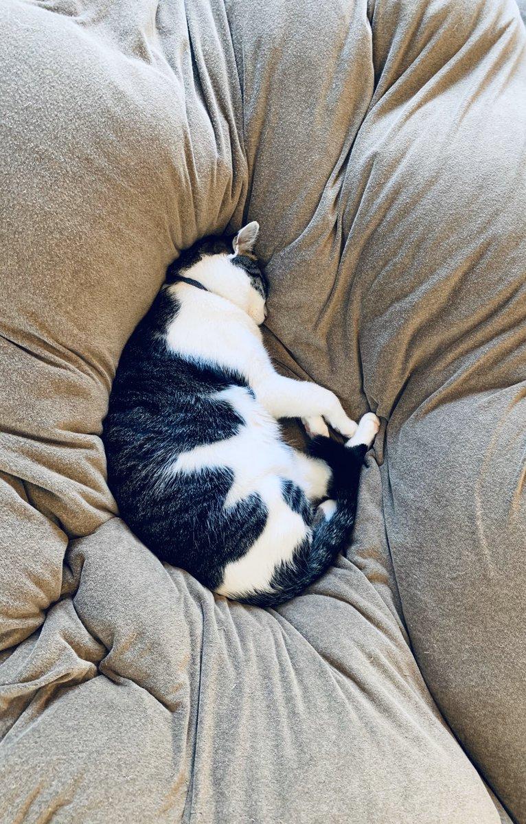 このところ自宅でのテレワークの頻度が上がったことで様々な知見を得たのですが、特筆すべき発見として、猫が毎日11時前から12時過ぎまで、必ず10歳児のベッドで布団に埋もれてグースカ眠っていることが挙げられます。