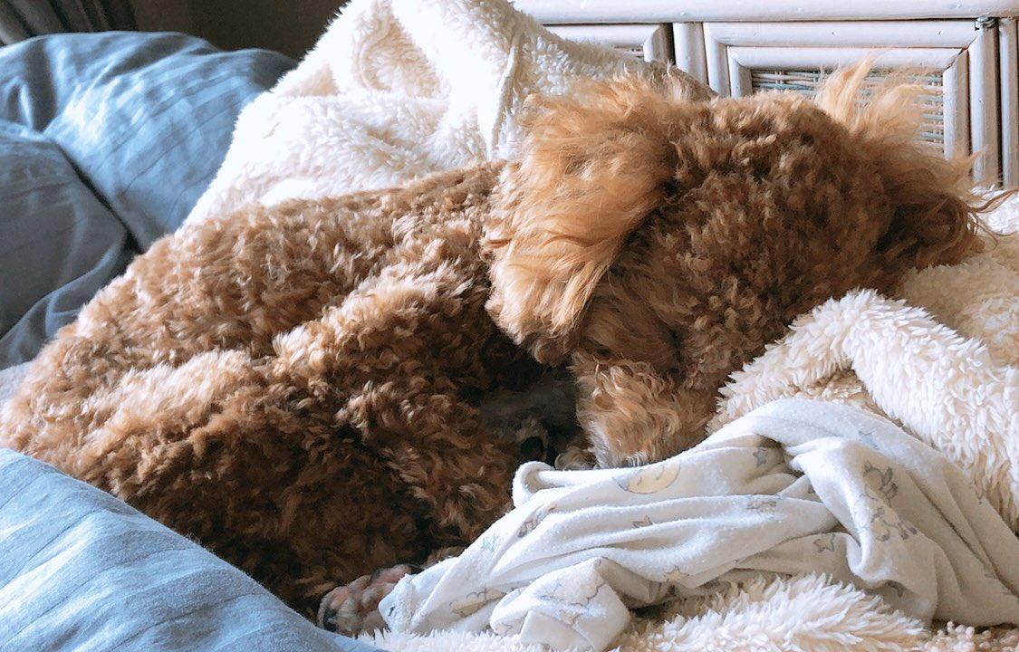家着の上で寝るのめちゃくちゃかわいいし、寝起きの顔。。笑#やしろきなこ