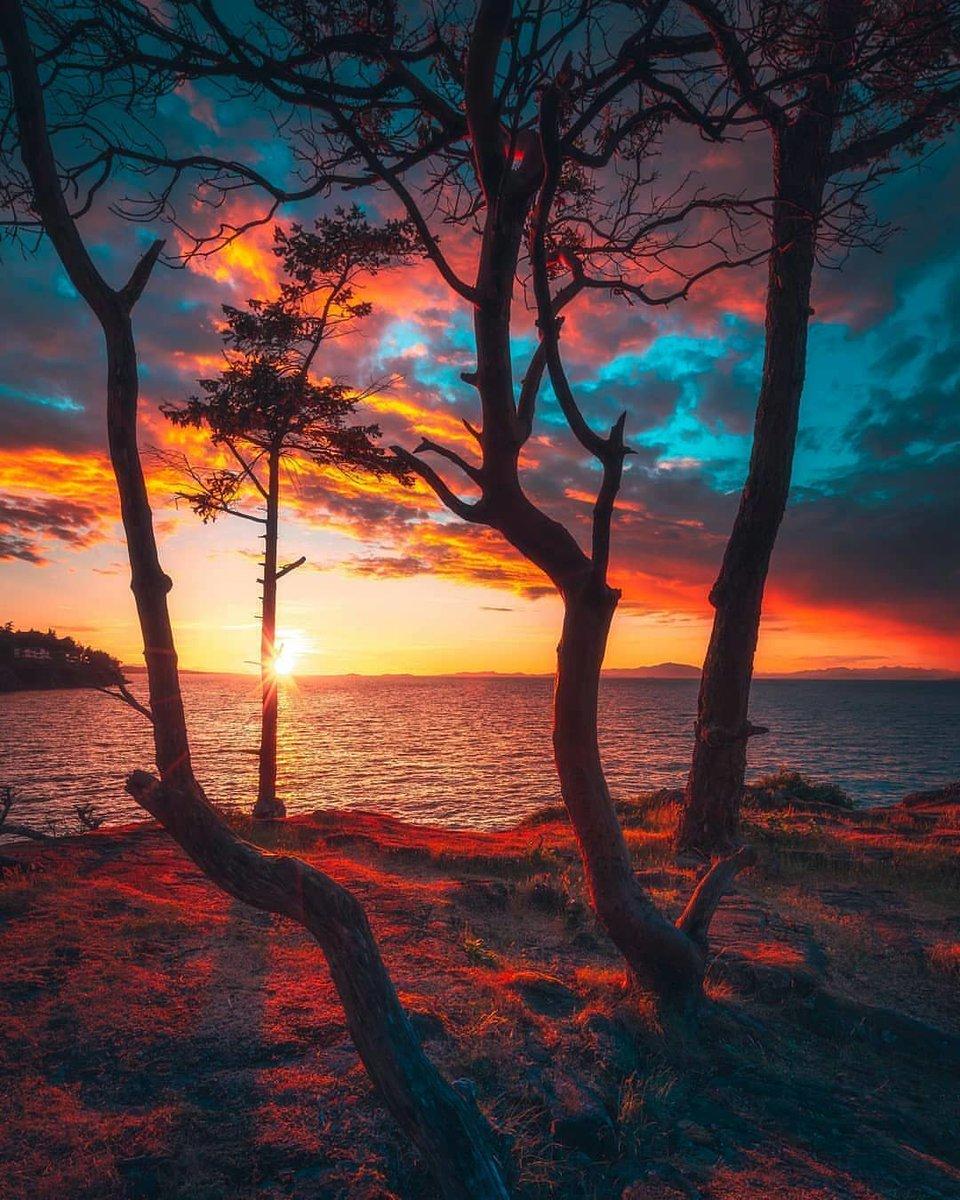 #beautiful #surprisinganimals #love #followme #nature #follow #Universe #mood #happy #friends #instagood #follow4follow #forestembroidery #impressionismart #embroiderynature #mysticpicture #easyembroidery #botanicalembroidery #surrealistic #landscapeembroidery