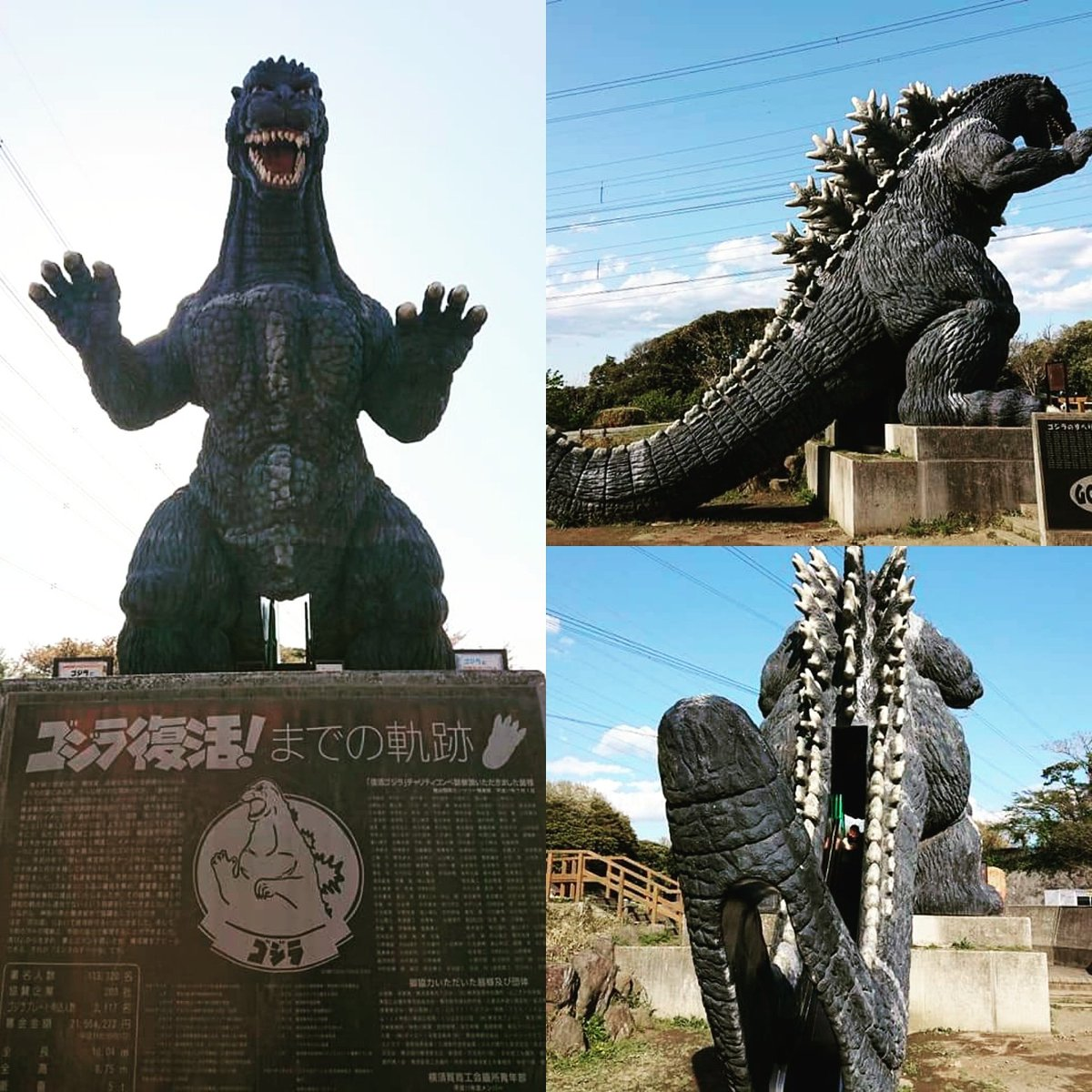 I want to be outside with #godzilla  Missing the #flower #park #tbt #tabbyinjapan  #stayhome #staysafe